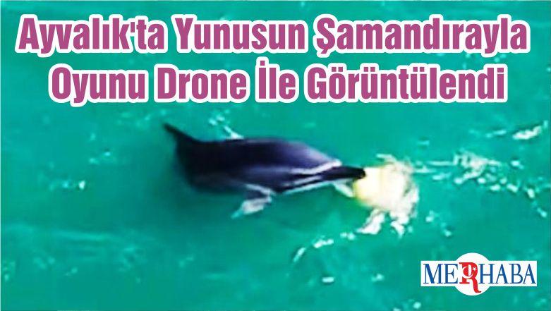 Ayvalık'ta Yunusun Şamandırayla Oyunu Drone İle Görüntülendi